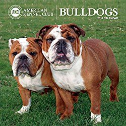 American Kennel Club Bulldogs 2018 Wall Calendar Lap Dogs
