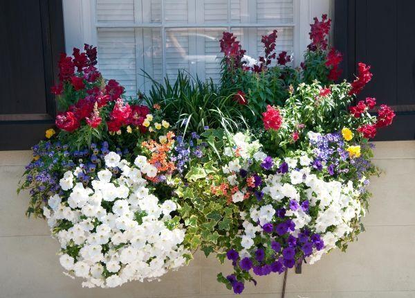 Kwiaty Na Balkon Pnace Szukaj W Google Container Flowers Container Gardening Window Box