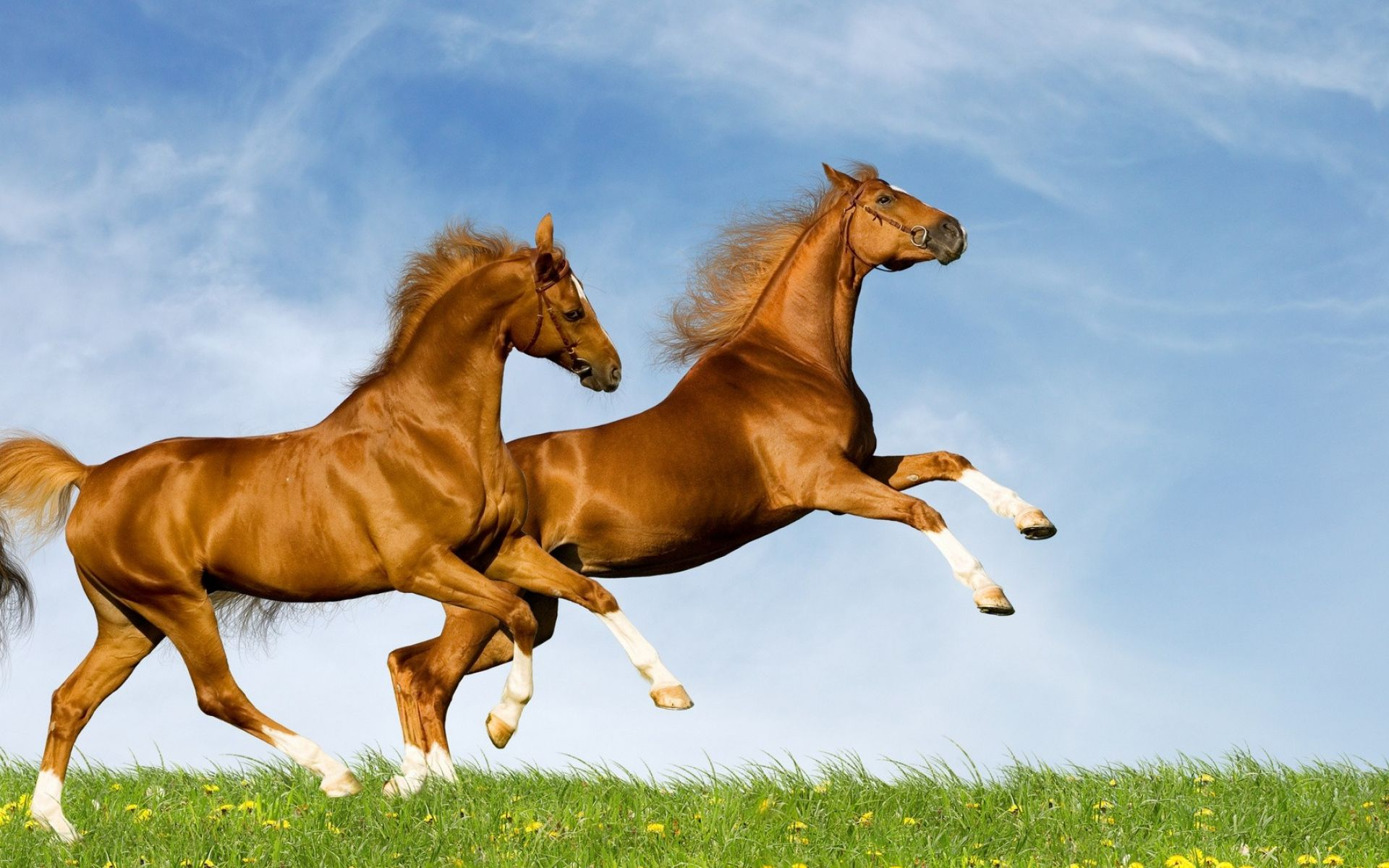Happy Horse Two Happy Horses Jumping Hd Wallpaper Download Wallpapers Pictures Photos Horse Wallpaper Horses Beautiful Horses