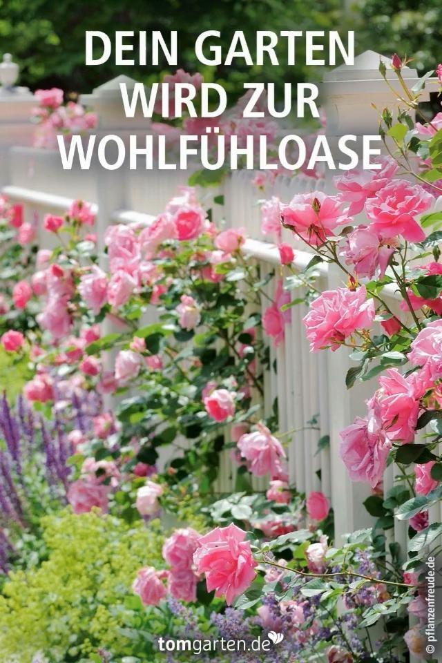 Photo of Alles für deinen Garten online finden
