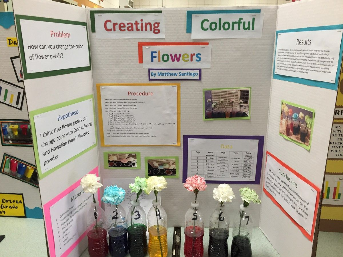 Image Result For Science Fair Projects Color Changing Flowers