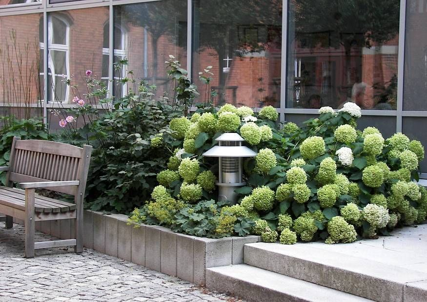 waldhortensie annabelle vorgarten nordseite pinterest hortensien garten hortensien und. Black Bedroom Furniture Sets. Home Design Ideas