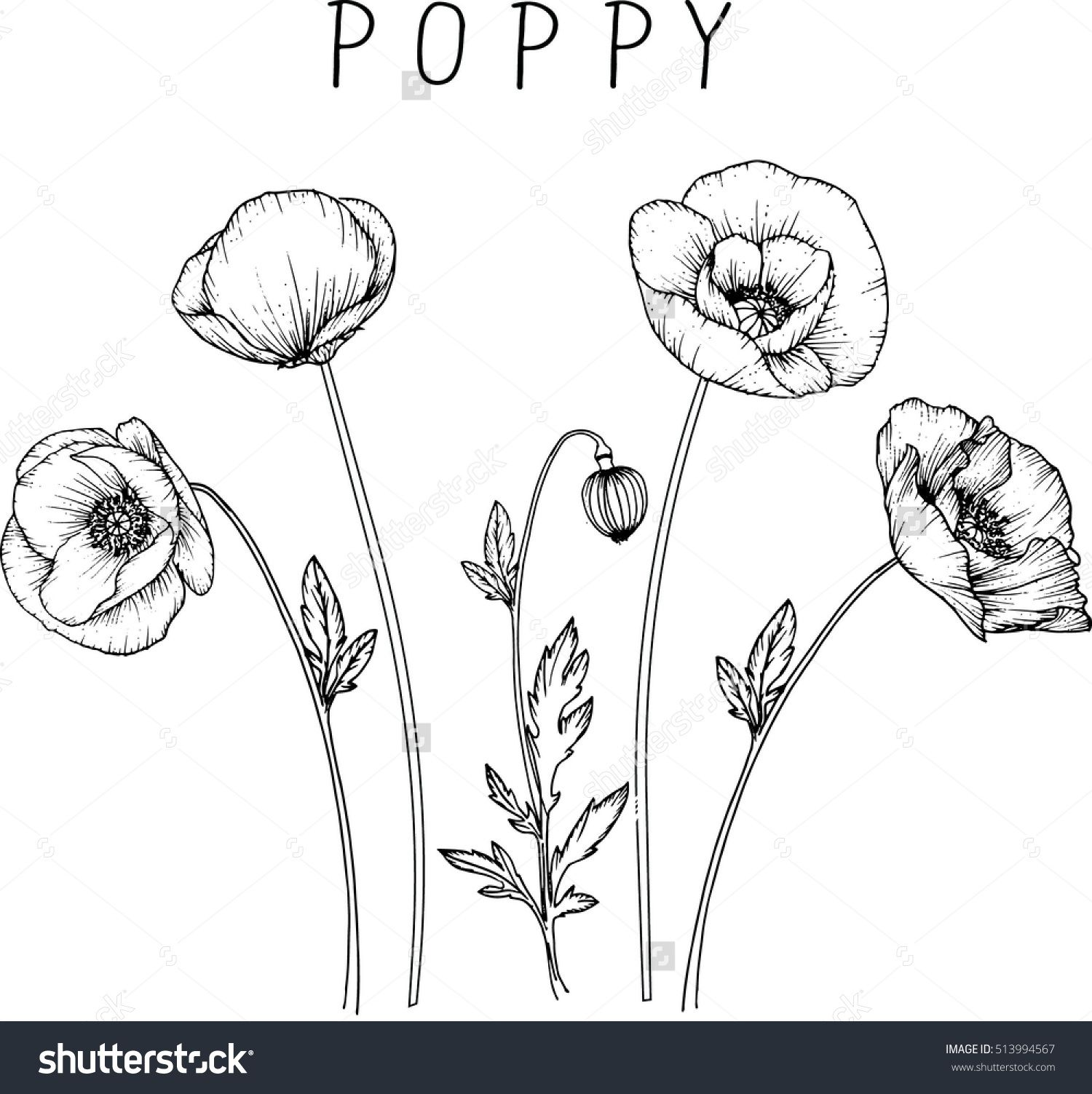 Drawing Flowers Poppy Flower Clip Art Or Illustration Sg Flowers
