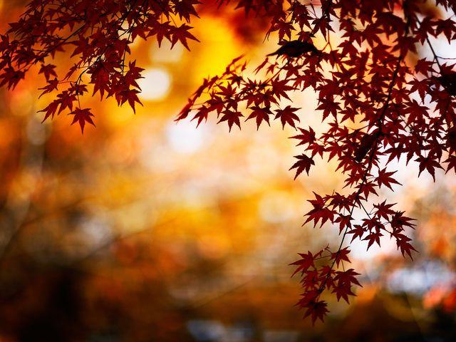 What Is The Season Of Your Soul Autumn Leaves Wallpaper Bokeh Wallpaper Fall Desktop Backgrounds Autumn leaves wallpaper hd