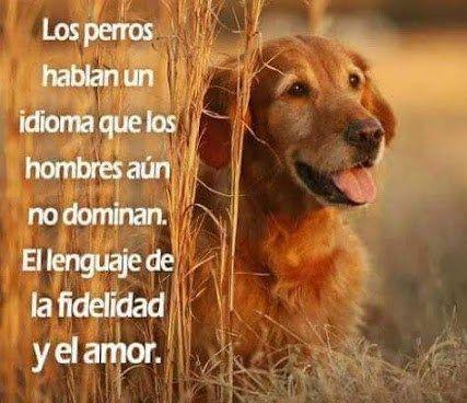 Imagenes Bonitas Con Mensajes Sobre La Fidelidad Y El Amor De Los