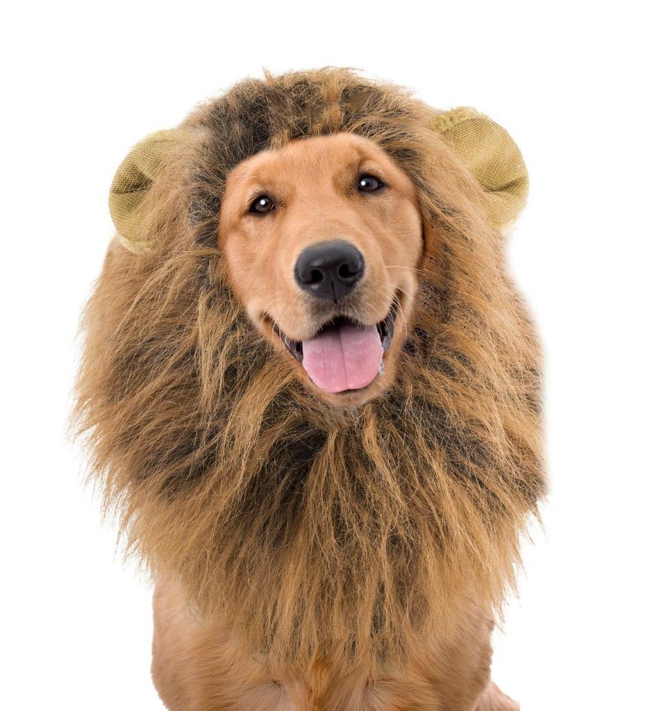 Lion S Mane Wig For Dogs Lion Mane Dog Lion Mane Dogs