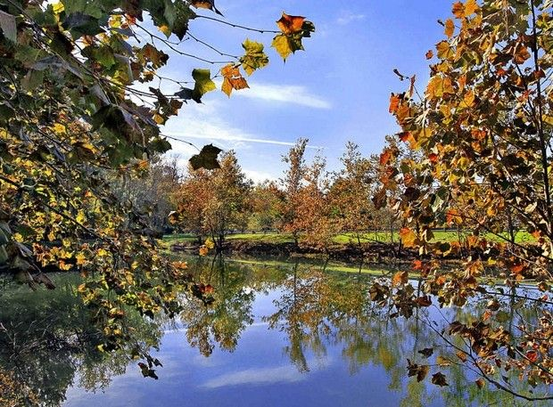 Beautiful crisp blue sky and trees showing off their colors of the Fall Season are reflected in the pond at 56th and Fall Creek Parkway