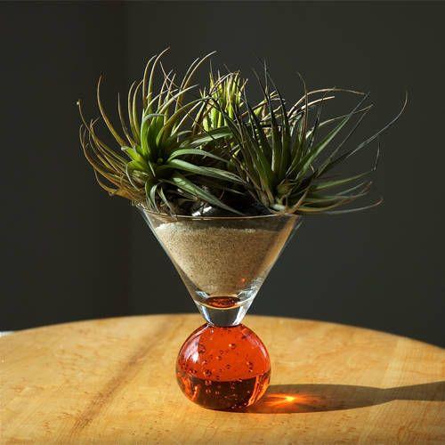Tillandsia martini