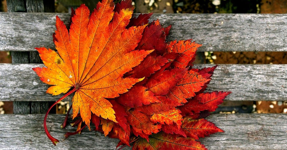 Pin By Gani Gumelem On Aesthetic Autumn Wallpaper Hd Desktop Wallpaper Fall Hd Wallpapers For Pc