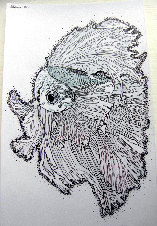 siamese fighting fish drawing interesnye retsepty