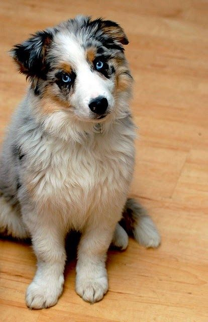 10 Dog Breeds That Are Not For Apartments Small Livings Note