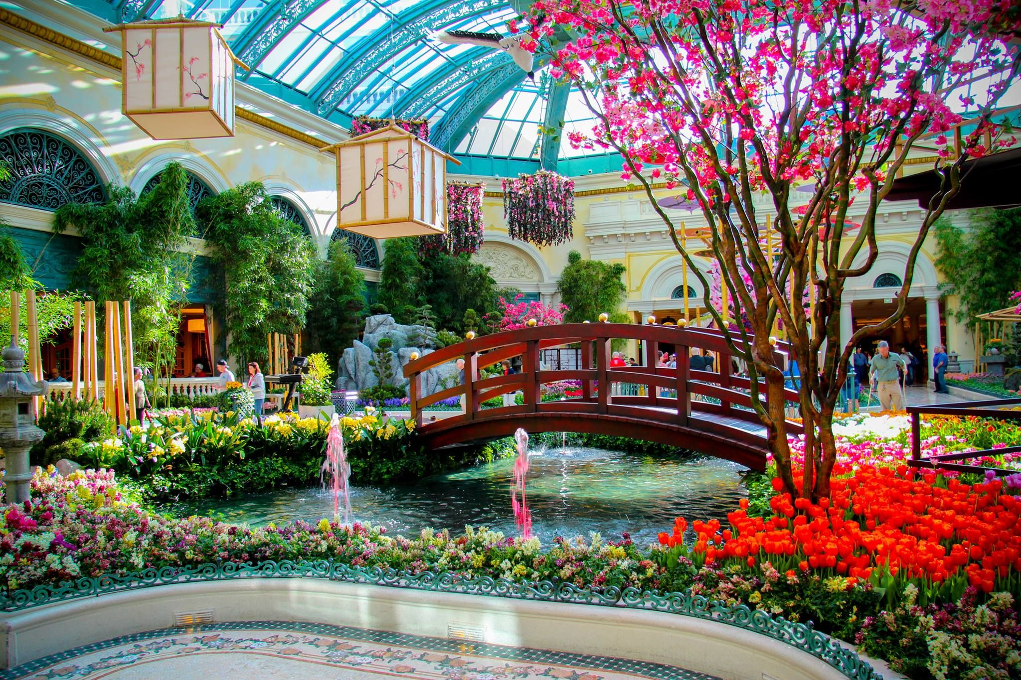 This last weekend, we welcomed the Japanese Spring themed display to the Bellagio Conservatory. #Bellagio… | Bellagio las vegas, Las vegas vacation, Vegas vacation