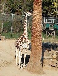 Oakland Zoo, Oakland, California, USA