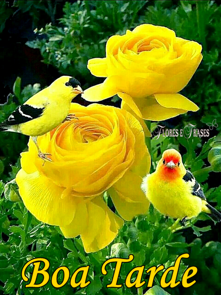 Flores E Frases Boa Tarde Good Morning Morning Greeting E Good