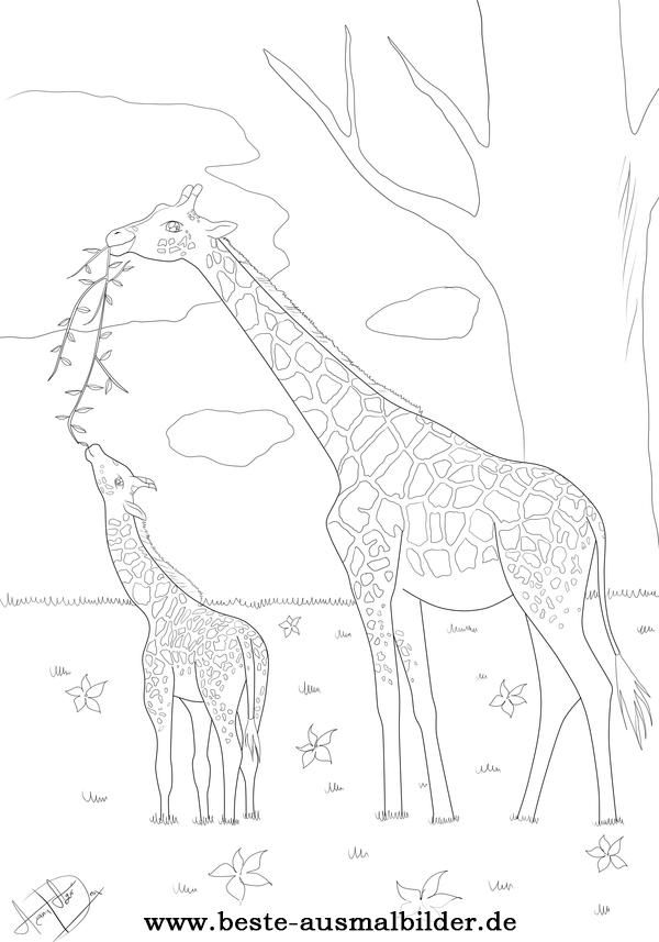 Ausmalbild Giraffe Animal Coloring