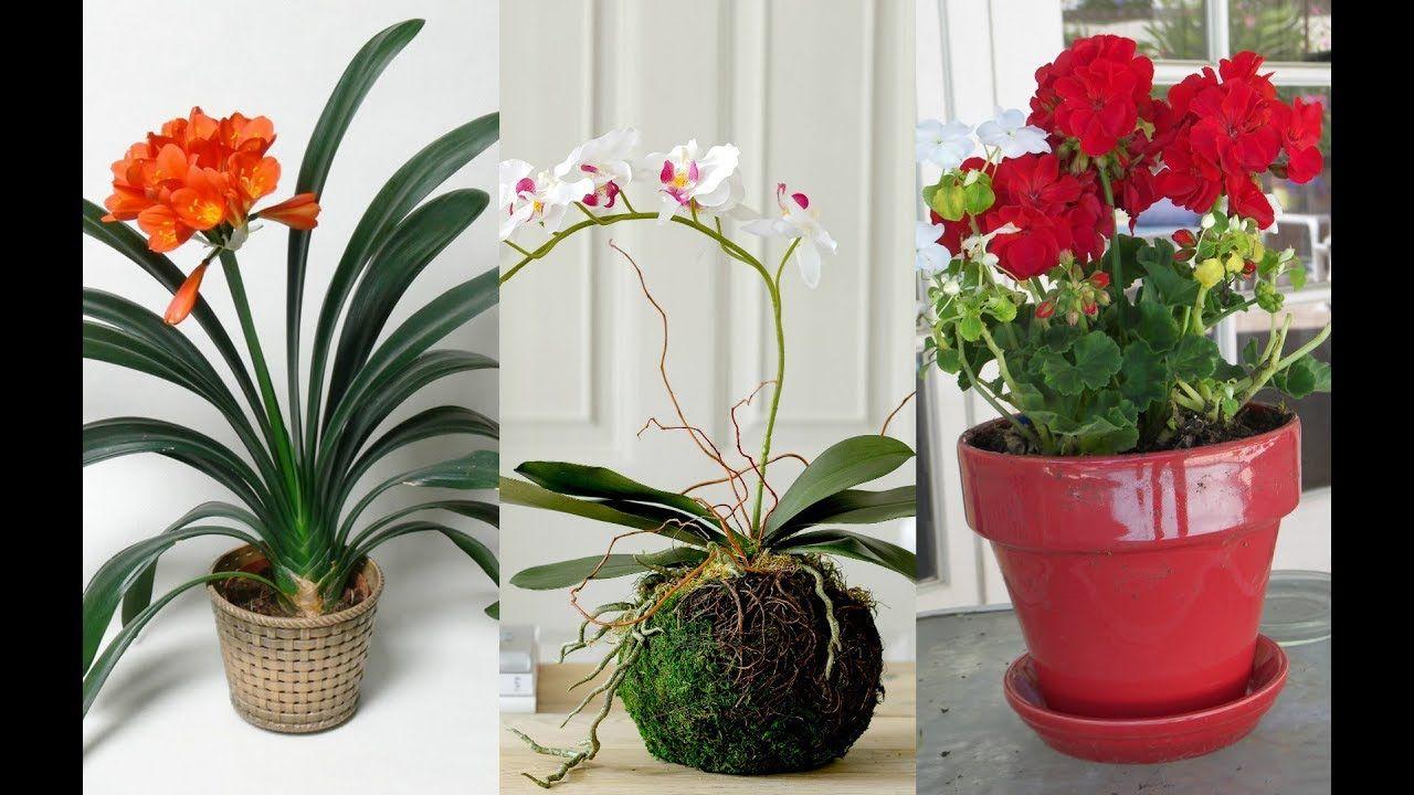 Best Indoor Flowering Plants In India Youtube Indoor Flowering Plants Flowering Plants In India Plant Decor Indoor