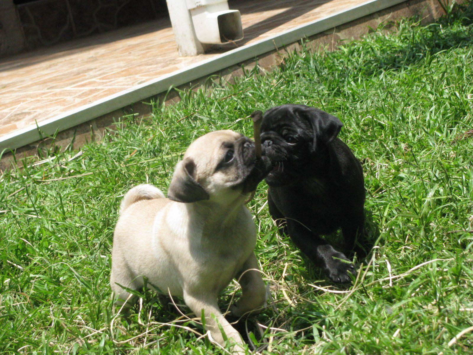 Marmite Memphis Pets Animals