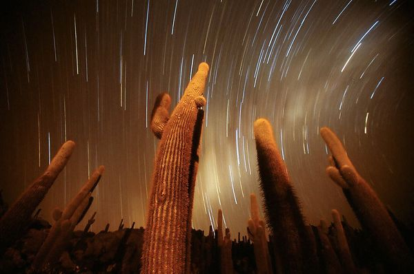 """Cactus Night - Photograph by Swee Ong Wu, My Shot - Giant cacti seem to reach for the stars in a newly released long-exposure picture taken from Isla de Pescado, an """"island"""" within the Bolivian salt flats of Salar de Uyuni."""