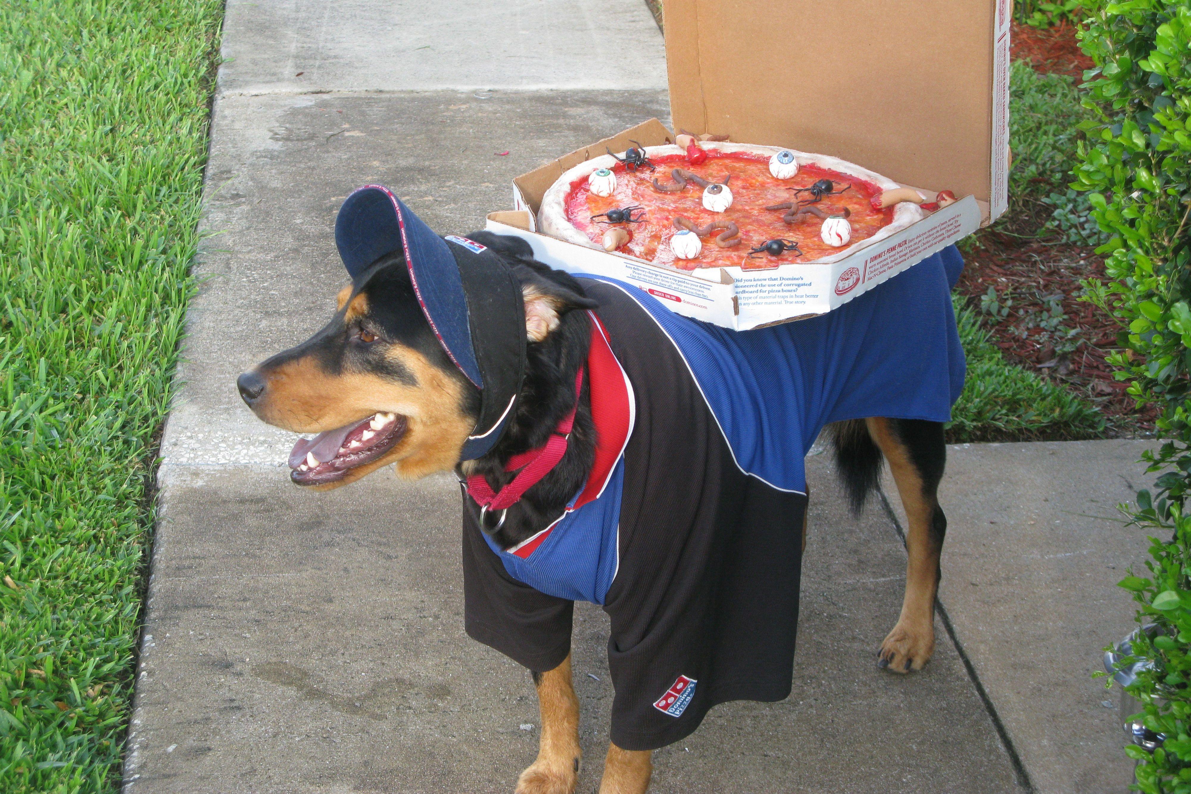 Halloween Pet Parade Dog Halloween Costumes Dog Halloween Pet