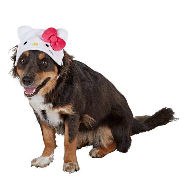 Hello Kitty Hat Bandanas Bows Eyewear Petsmart Hello Kitty Kitty Pet Gear
