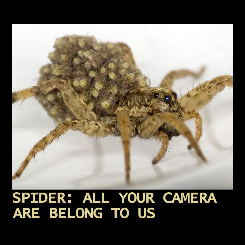 How to get rid of spider webs around your security cameras
