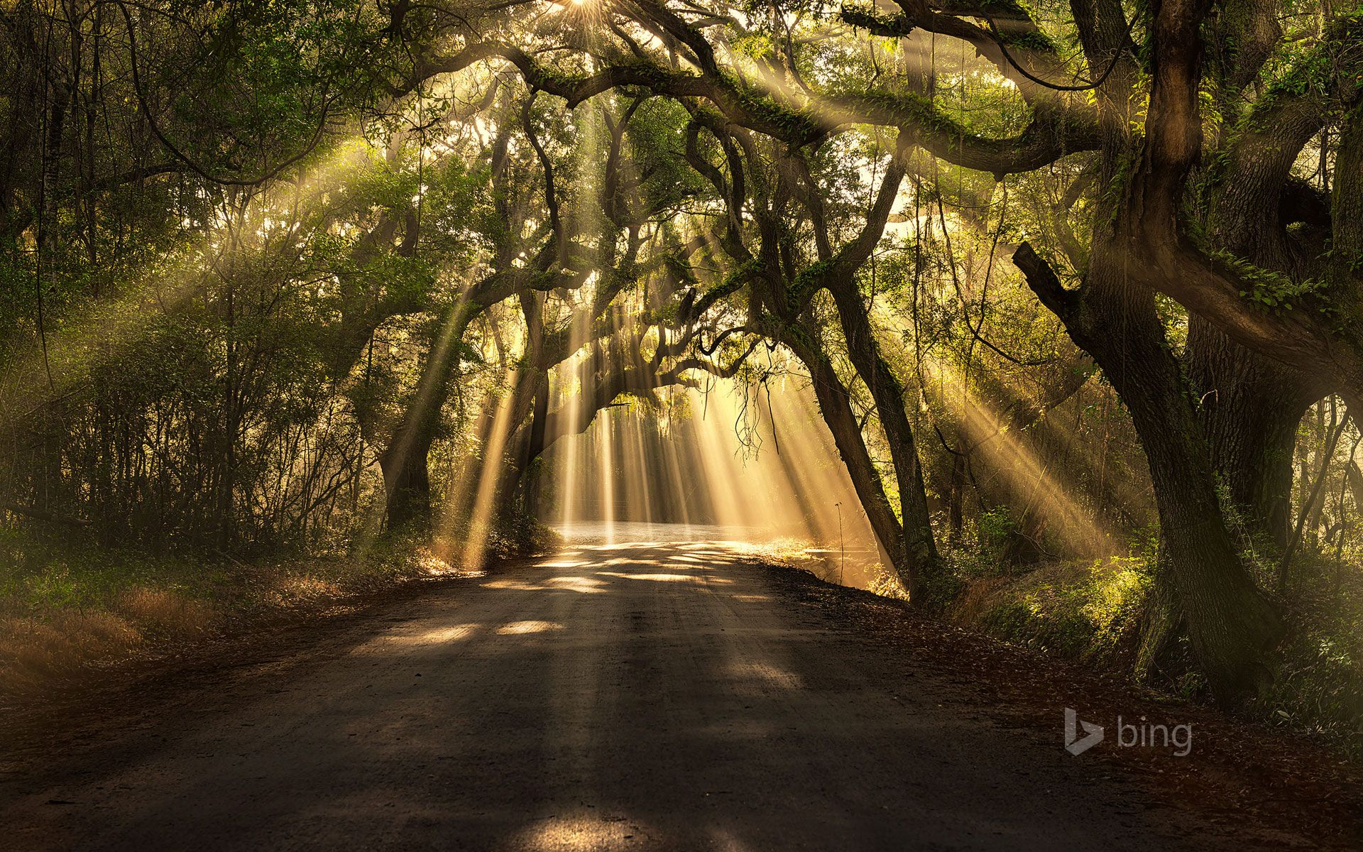 Light and peace, Botany Bay Road, Edisto Island, South Carolina - by  Michael Woloszynowicz