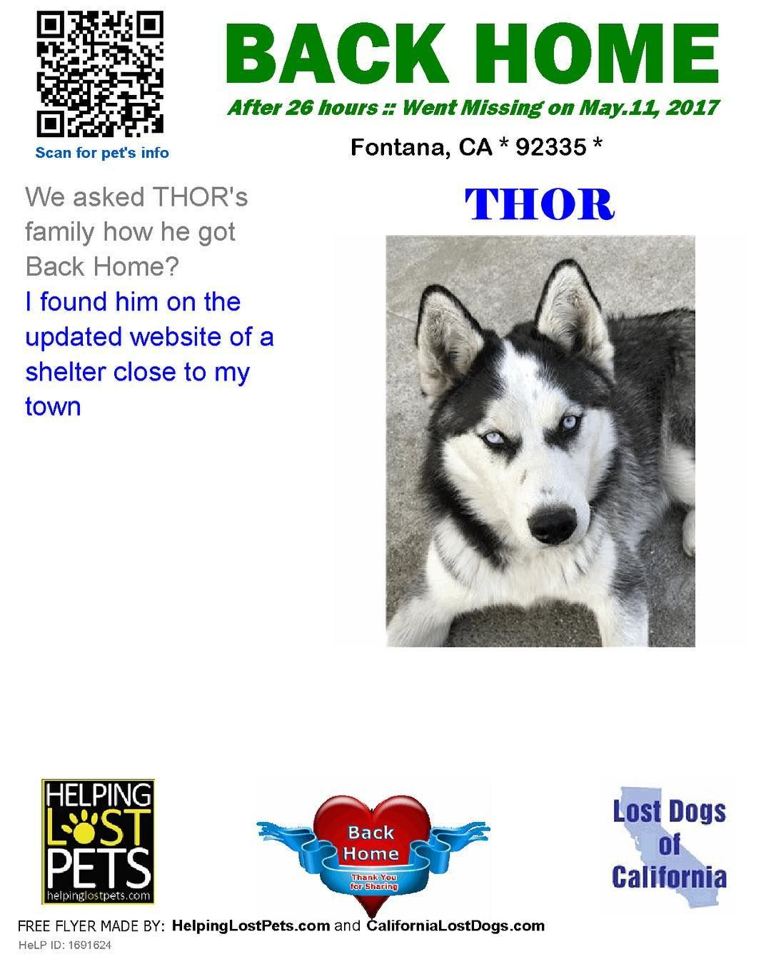 We Are Very Happy To Report Thor Is Back Home After 1 Day I Found Him On The Updated Website Of A Shelter Close To My Town Losing A Dog Losing