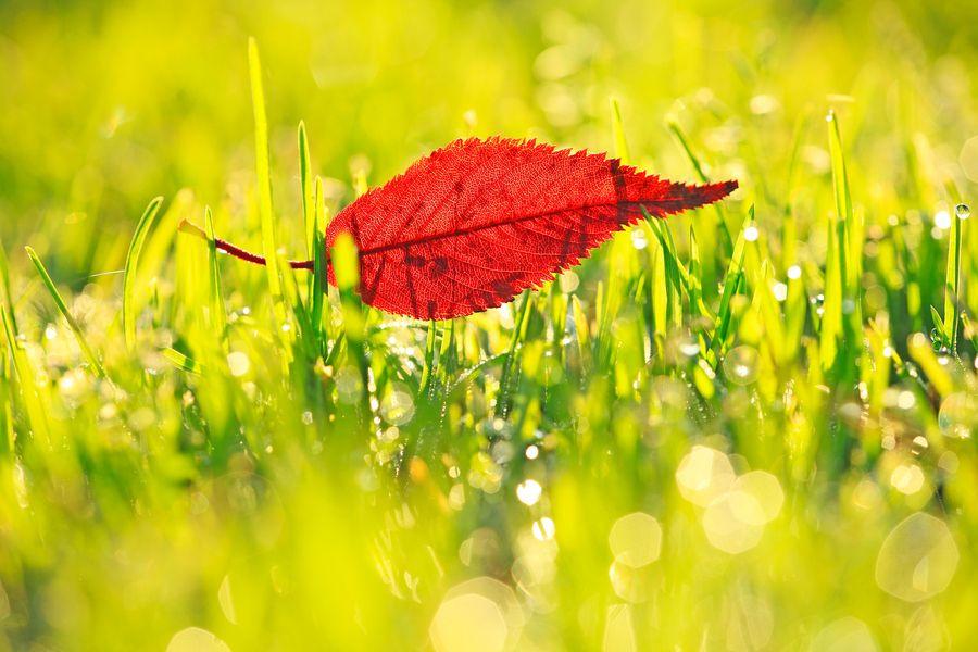 Fallen Leaves by Mirai Takahashi on 500px
