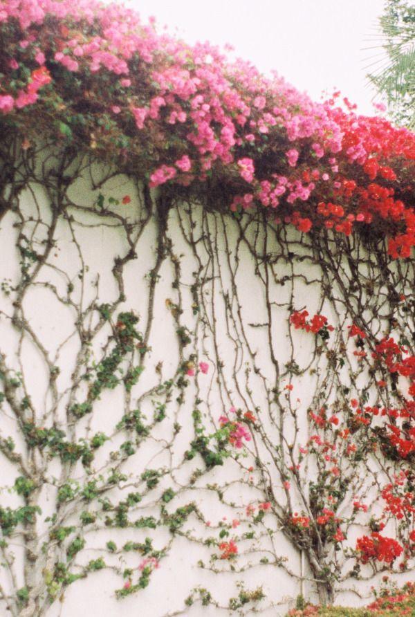 Lovely adorning pink blooms.