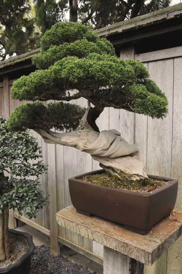 Bonsai Tree Ideas_59 #bonsaiplants