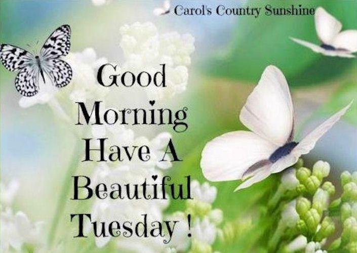 Good Morning Tuesday Quotes Quotesgram Good Morningdays Of Week