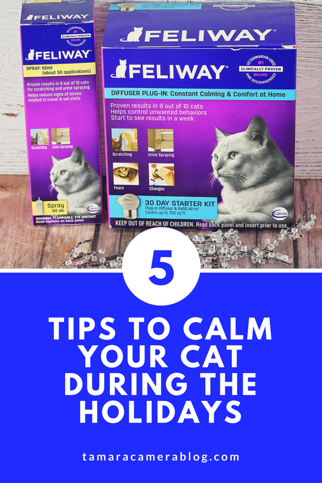 5 Tips To Calm Your Cat During The Holidays Calming Cat Cat Behavior Cat Noises