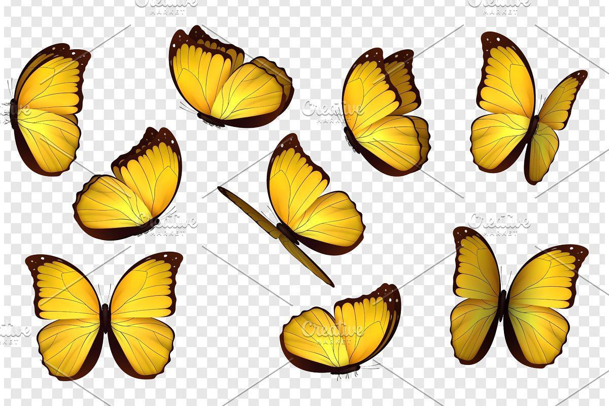 Butterfly Vector Illustration Butterflies Vector Yellow Butterfly Tattoo Butterfly Images