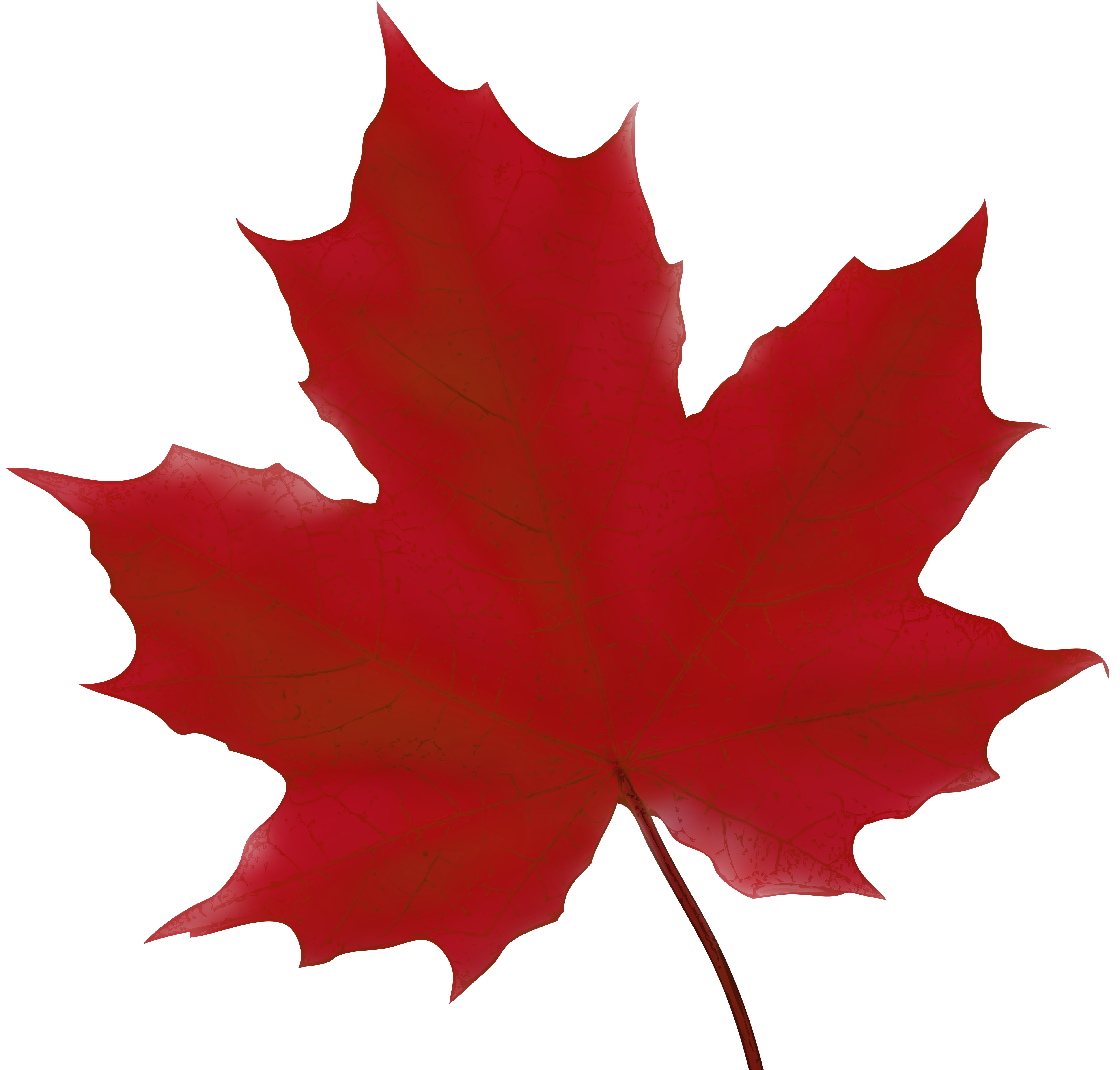 Maple Leaf Red Png Clip Art Image Gallery Yopriceville High Quality Images And Transparent Png Free Clipart Art Images Clip Art Art