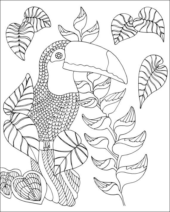 Color Your Way Into The World Of Fantastic Birds With This Stunning Adult Coloring Book