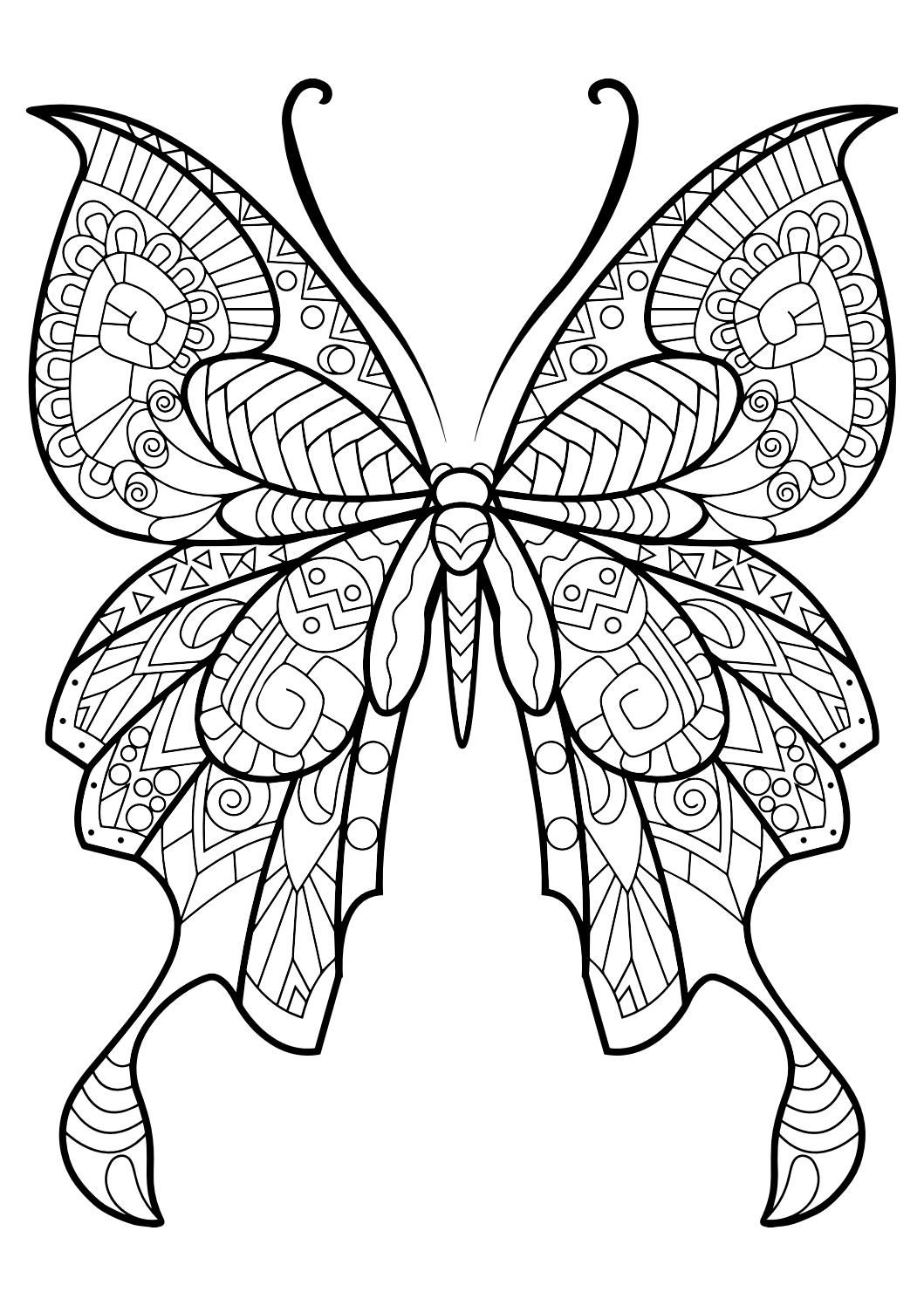 Adult Butterfly Coloring Book With Images