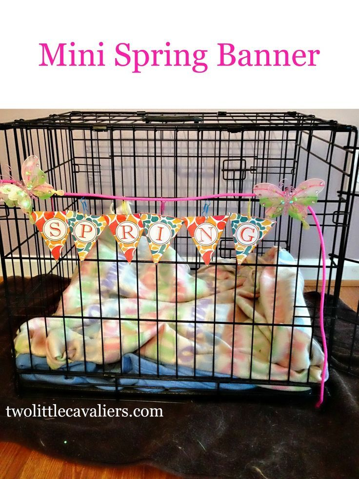 Make A Crate A Home For Cratehappypets Rainy Day Activities For Kids Happy Animals Pet Websites