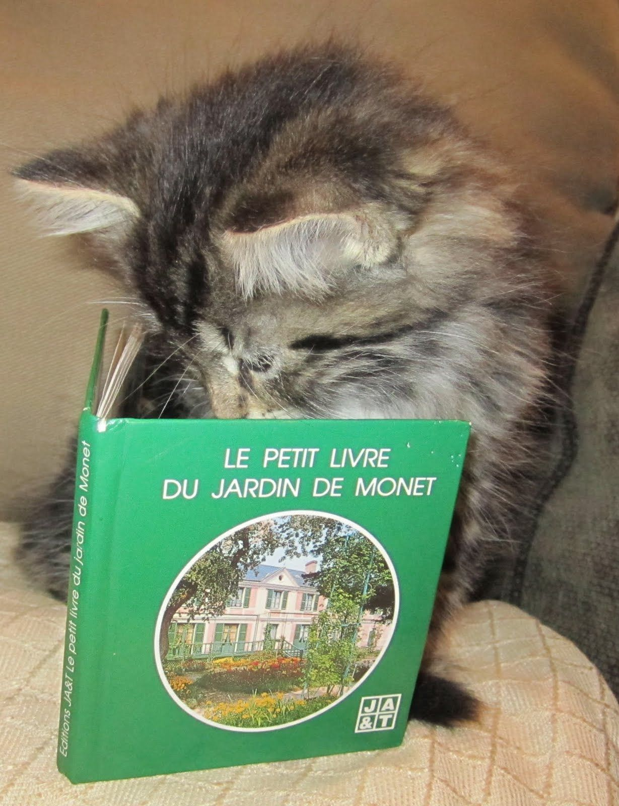I Read 30 Minutes Everyday Animal Book Kitty Cat Books