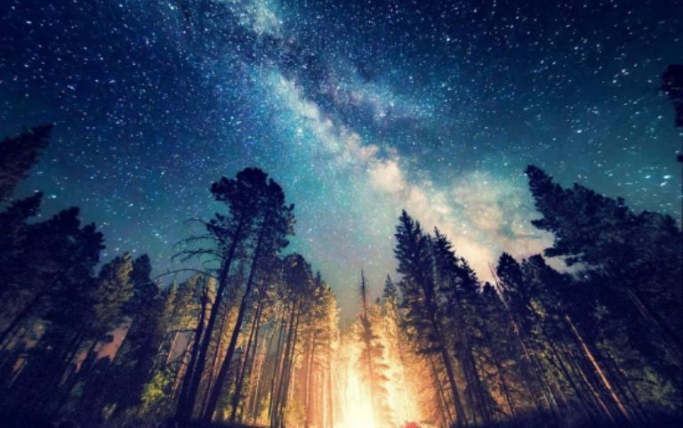 Milky Way In The Red Wood Forest Nature Landscape Scenery