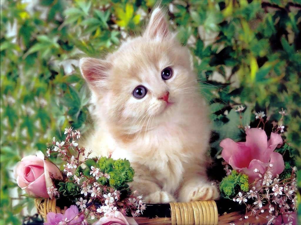 Fondo De Pantallas De Gato En Flores De Gatos Gratis Para