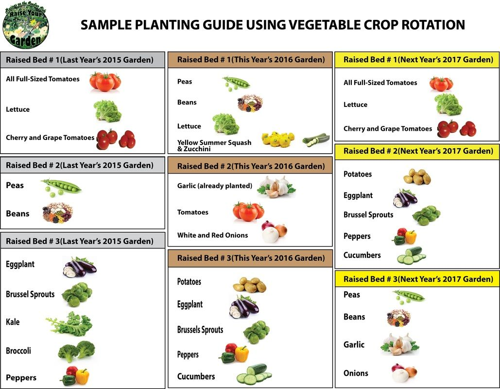 Vegetable Families Soil Depletion Crop Rotation Infographic Crop Rotation Garden Types Gardening Tips