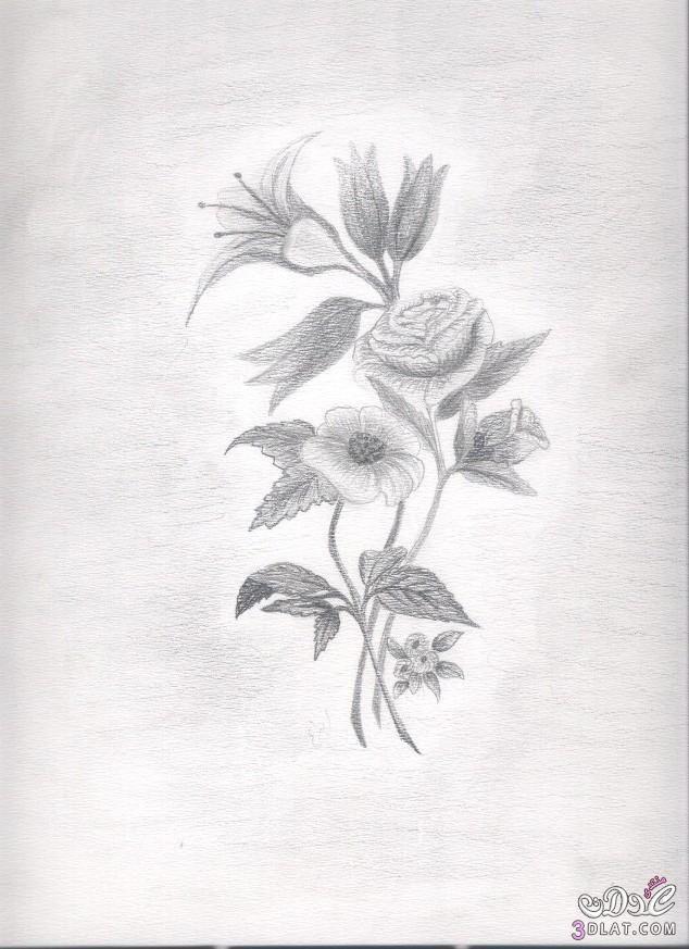 رسومات بالقلم الرصاص رسومات ورود 2015 رسومات ورود بالقلم الرصاص رسومات جد Disney Art Drawings Lotus Flower Tattoo Flower Tattoo