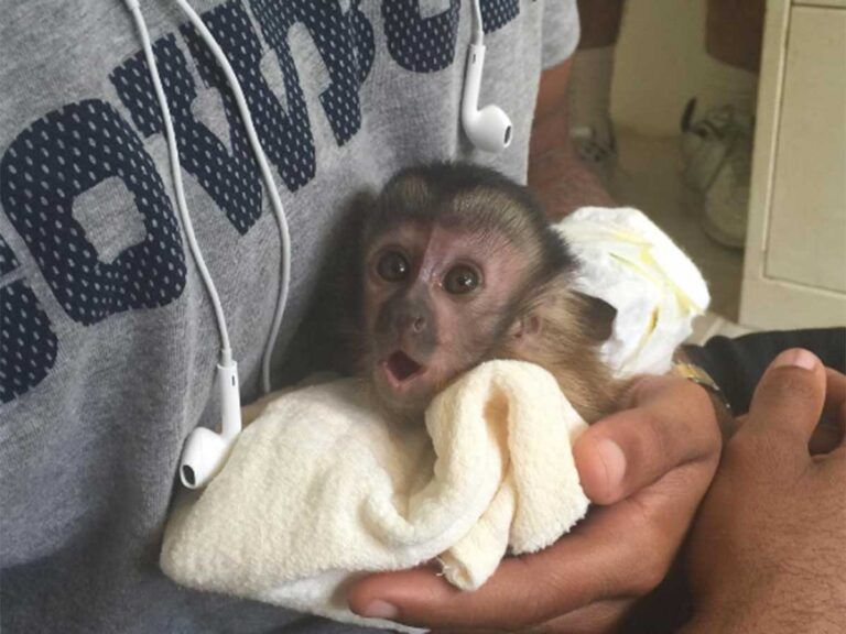 Pin On Pet Monkey