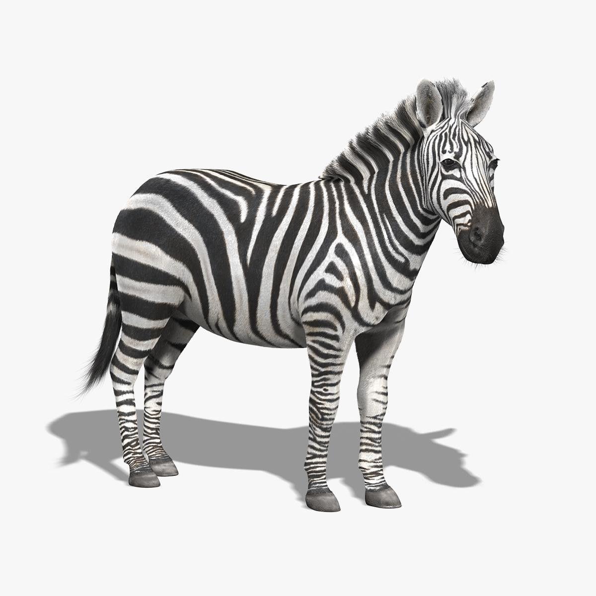 3dsmax Photorealistic Zebra Fur Zebra Green Zebra Fur