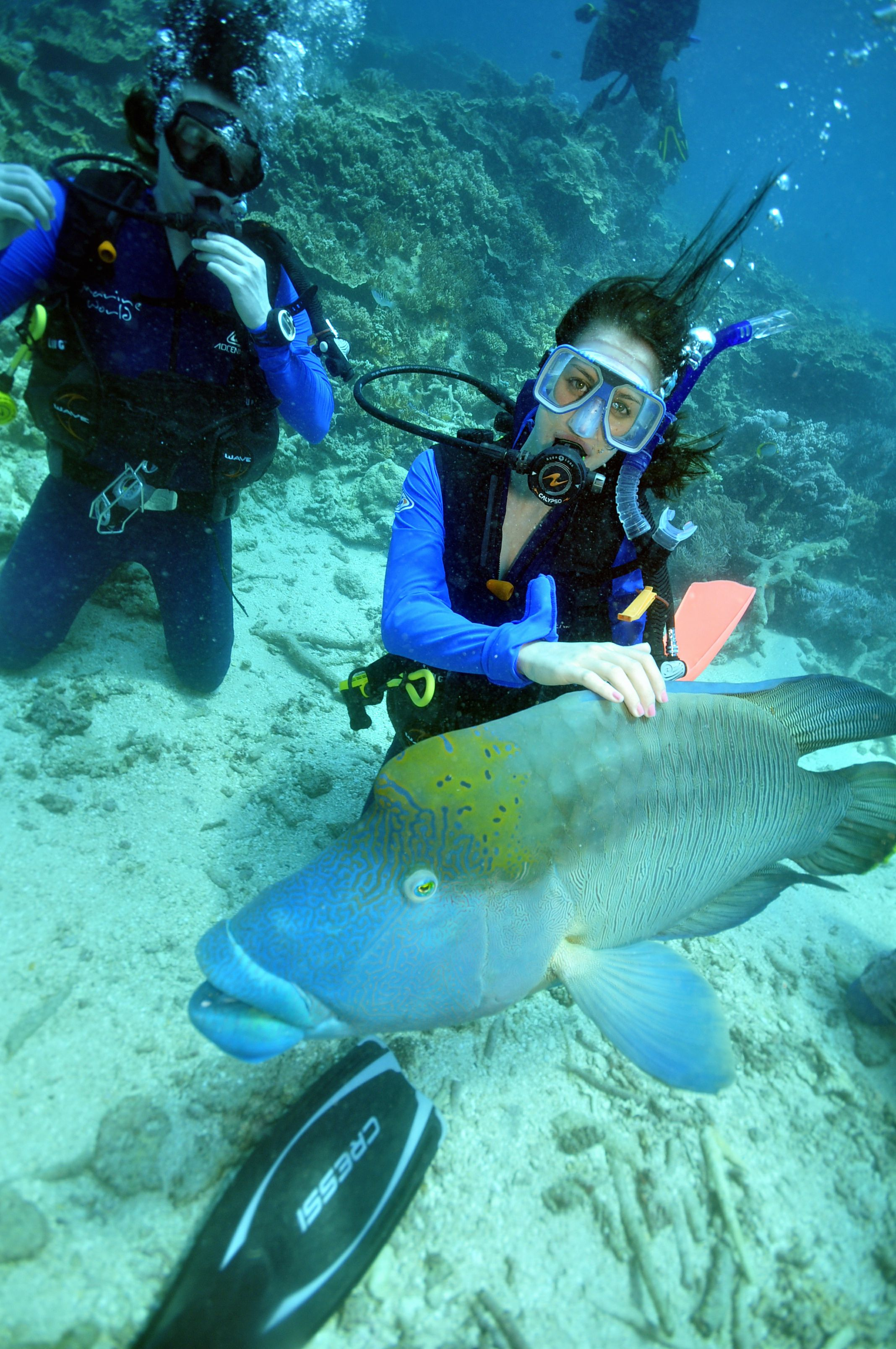 Diving In The Great Barrier Reef, Australia. Go To Www