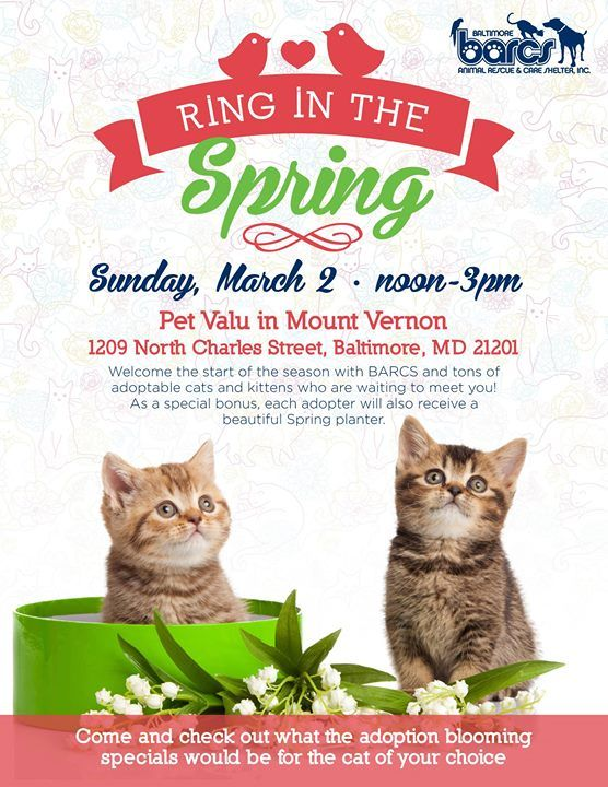 Barcs Animal Shelter Baltimore Md Help Us Ring In The Spring With Our Cat Adoption Event This Sunday 3 2 At The Petvalu In Animal Shelter Barcs Cat Adoption