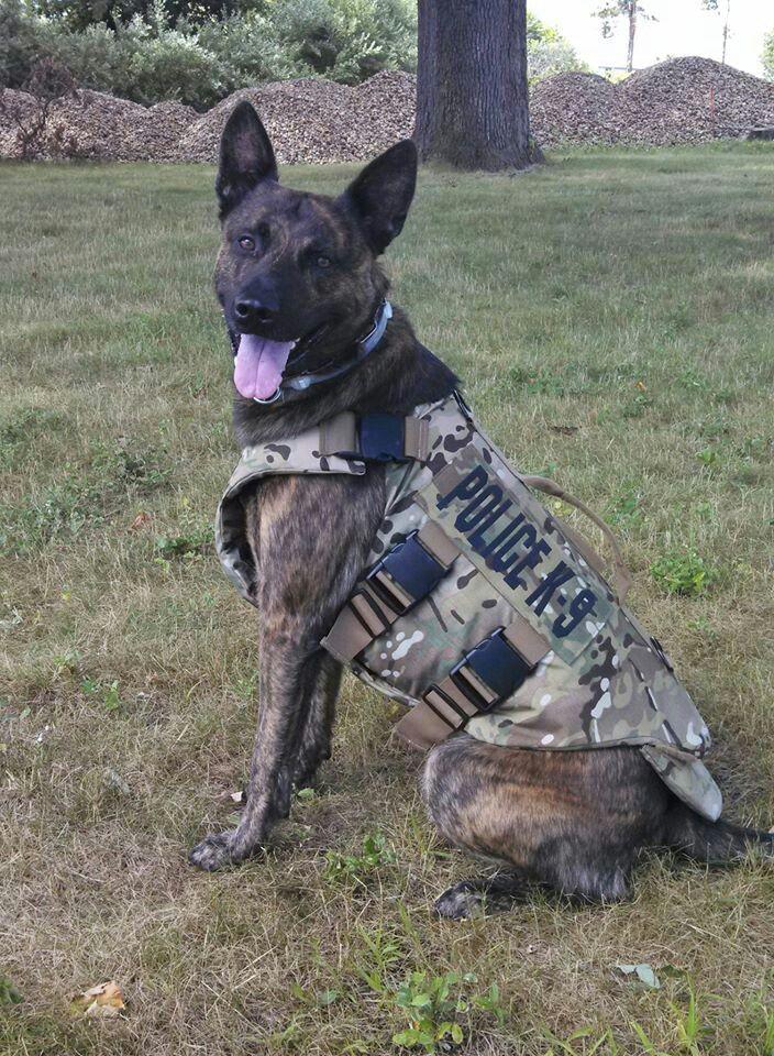 K9 Brock RI Dept Of Corrections Shows Off His New Vest