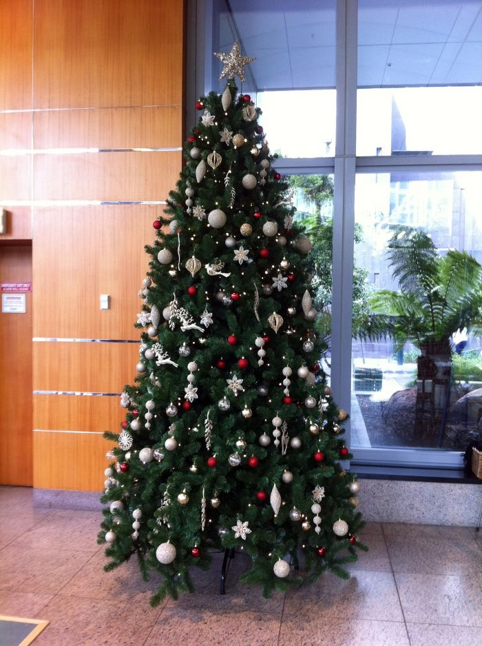 10ft scandia spruce with champagne gold and red. - 10ft Scandia Spruce With Champagne Gold And Red. Holiday Spirit