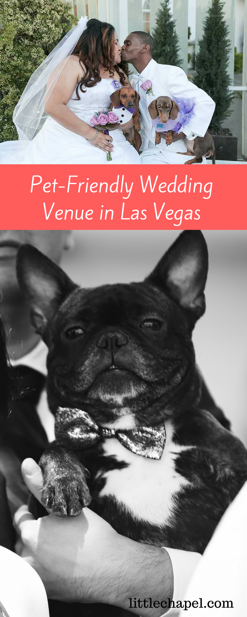 Vegas Wedding Venues That Allow Dogs And Cats Find Out Which Wedding Chapel Is Pet Friendly Alo Vegas Wedding Venue Vegas Themed Wedding Pet Friendly Weddings