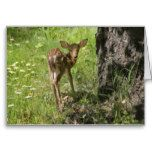Fawn's First Day Greeting Card
